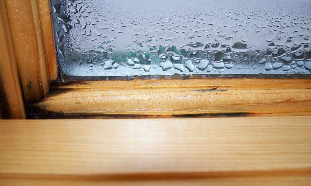 Buying a New House? Inspect for Mold, Water Stain Marks