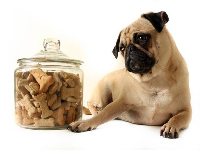 How to select healthy food for a pet