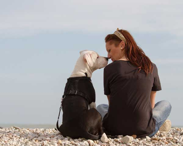Owning a dog - learn more about this responsibility