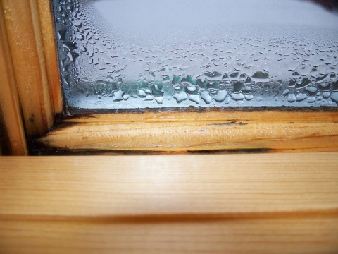 Buying a New House? Inspect for Mold, Water Stain Marks Picture