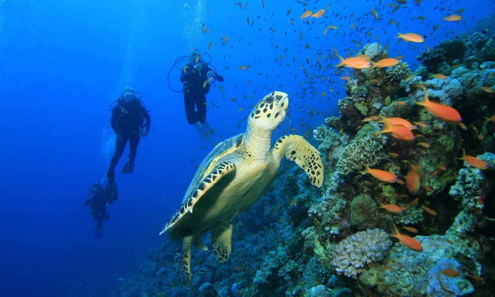 Outing ideas for a marvelous Cancun experience